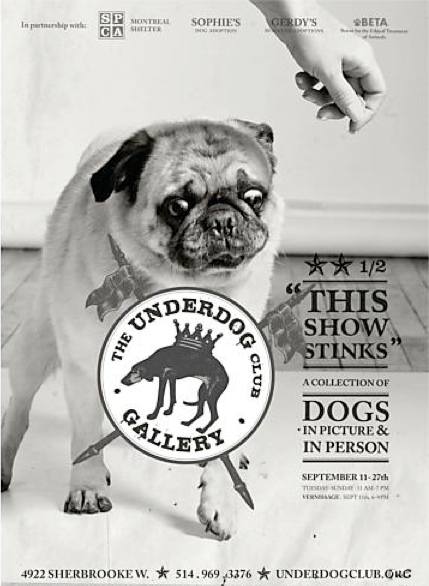 Underdog Rescue Shelter SPCA