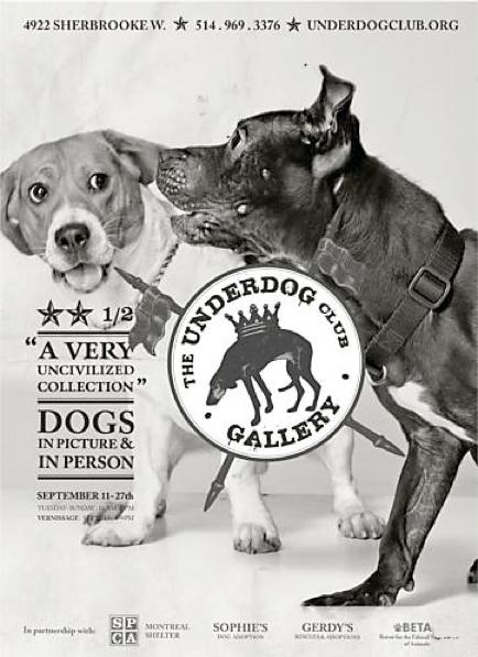 Underdog Rescue SPCA Dog Shelter